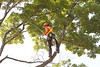 2015 09 30 Taking the Maple Tree Down 48