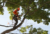 2015 09 30 Taking the Maple Tree Down 46