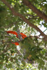 2015 09 30 Taking the Maple Tree Down 56