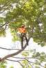 2015 09 30 Taking the Maple Tree Down 49