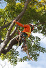 2015 09 30 Taking the Maple Tree Down 70