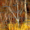 Foliage Abstract