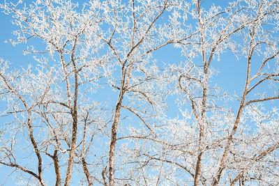 190222 - Julian snow - 01265