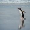 2019 Falklands-Volunteer point-0127