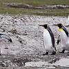 2019 Falklands-Volunteer point-0184