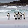 2019 Falklands-Volunteer point-0130