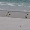 2019 Falklands-Volunteer point-0084