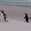 2019 Falklands-Volunteer point-0086