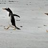 2019 Falklands-Volunteer point-0092