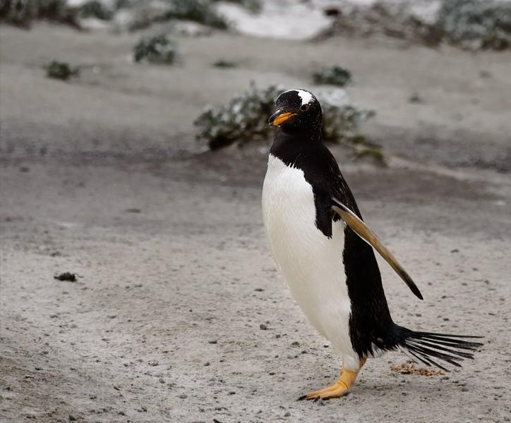 2019 Falklands-Volunteer point-0078
