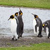 2019 Falklands-Volunteer point-0275