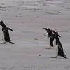 2019 Falklands-Volunteer point-0091