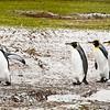 2019 Falklands-Volunteer point-0185
