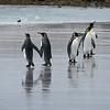 2019 Falklands-Volunteer point-0150