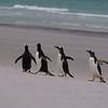 2019 Falklands-Volunteer point-0085