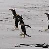 2019 Falklands-Volunteer point-0093