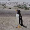 2019 Falklands-Volunteer point-0079