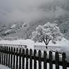 Snowy scene in Kandergrund -- Absolutely beautiful  (Photo by Doug)