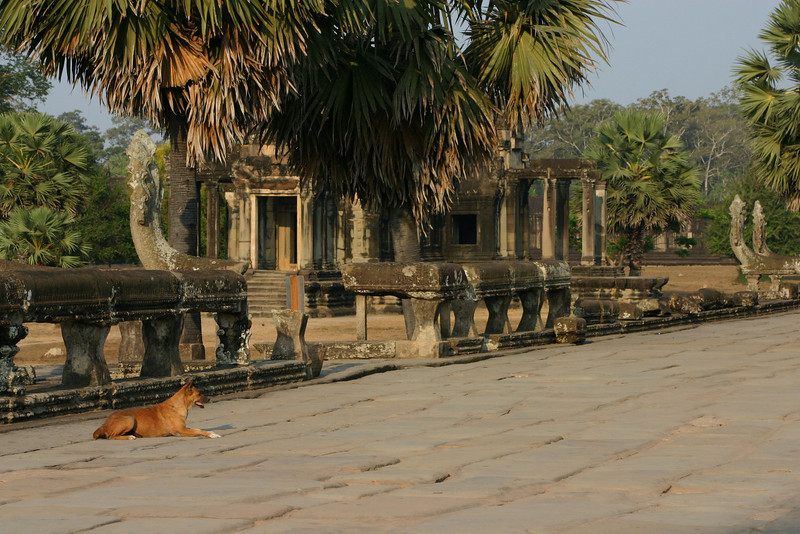Dog and library at entryway to Angkor Wat