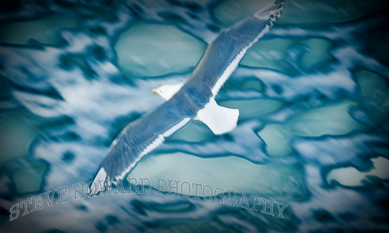 Blurred Gull