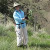 HCPC volunteer & member Sandy Coulson digging Scotch thistle to protect the threatened Mac Farlane's four-o'clock plants in Hells Canyon National Recreation Area