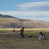 Young men restoring elk habitat.