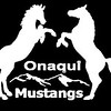 Onaqui Mustangs