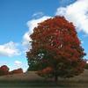 Autumn Sentinal