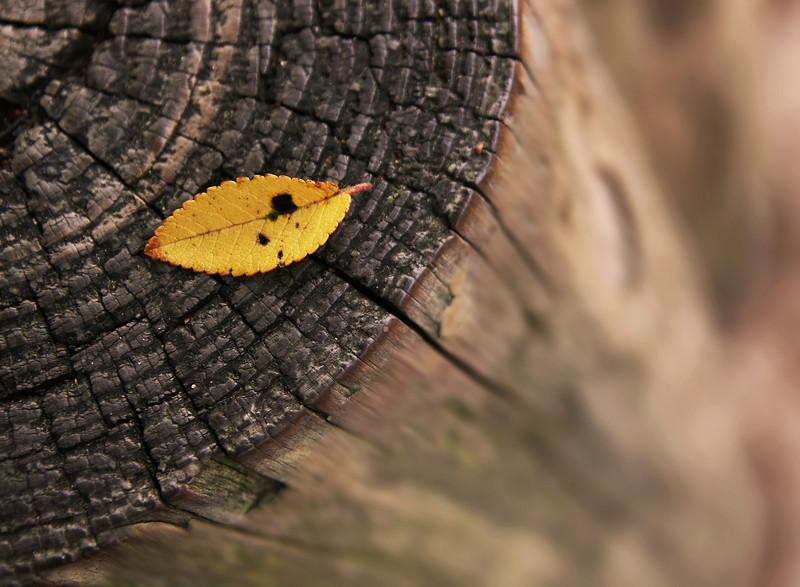 Leaf Post