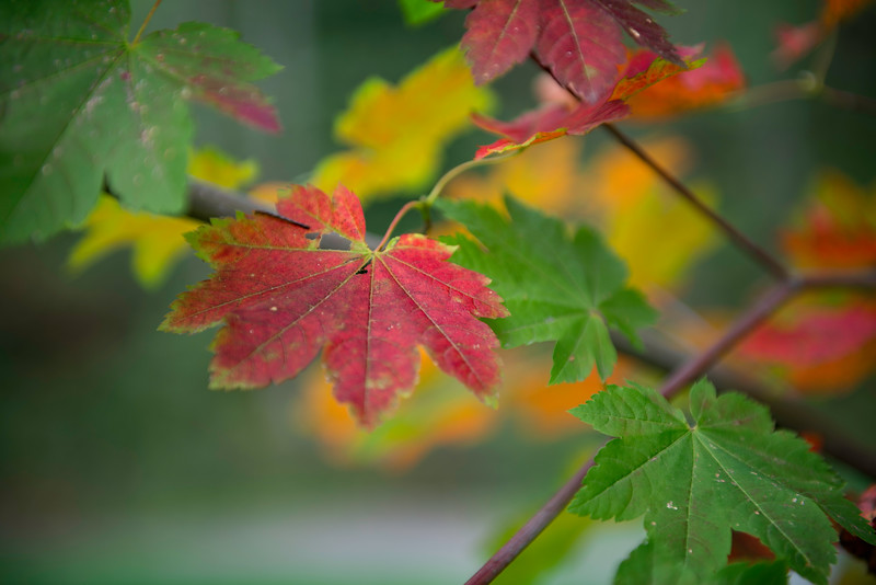 Red,Yellow,Green of Fall