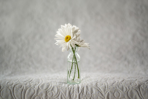May 5 - Three Cut Daisies<br /> <br /> I'm enjoying taking still life images  :)
