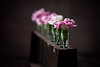 April 26 - All In A Row<br /> <br /> The last of the recent carnations :)