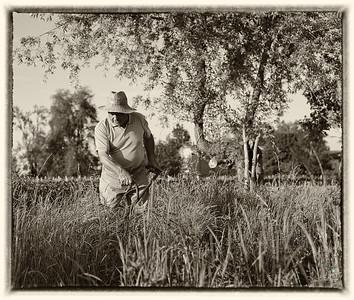 Il taglio dell'erba, SL