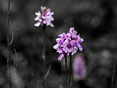 Orchidee 1, SL