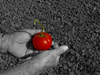 Pomodoro 1, SL