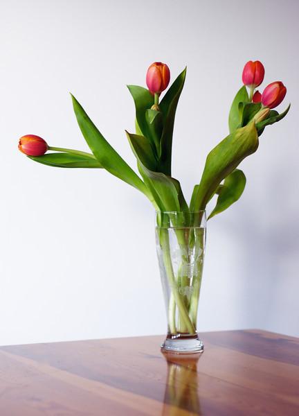 Flowers_2011-06-18_15-22-53__DSC7407_©RichardLaing(2011)