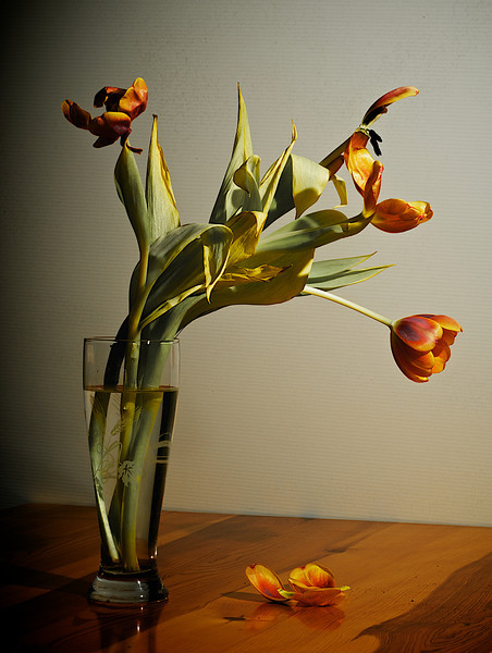 Tulips_2011-06-23_19-34-14__DSC7921_©RichardLaing(2011)