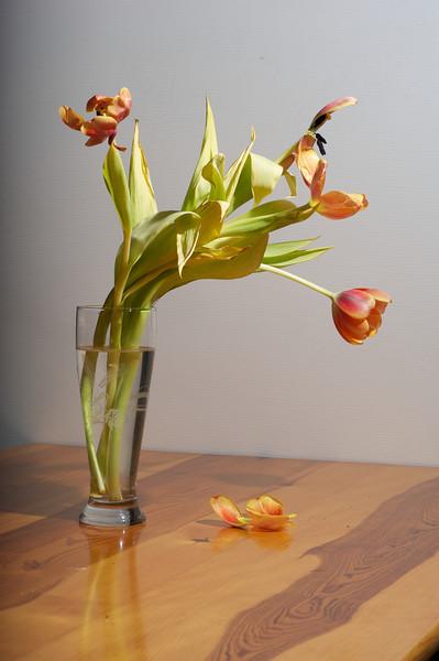 Tulips_2011-06-23_19-31-53__DSC7915_©RichardLaing(2011)