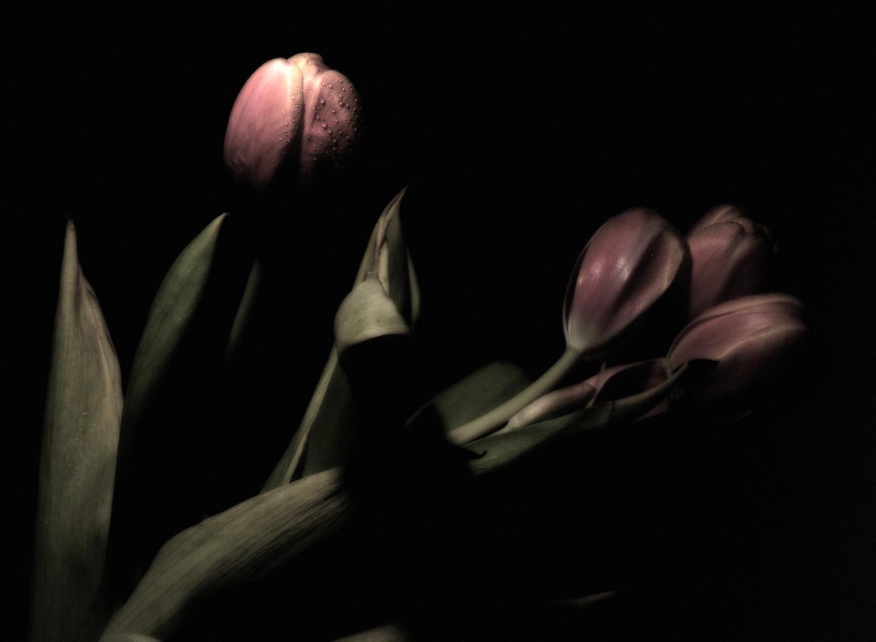 Flowers_2011-06-21_20-10-50__DSC7809_©RichardLaing(2011)
