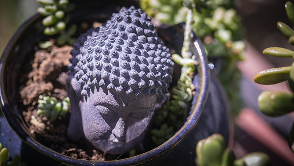 Buddha's head in a pot