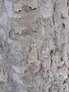 Bark texture sample