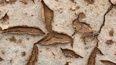 Algal mat in dry wetland