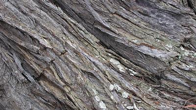 Bark texture sample