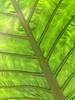 Leaf Tracka
