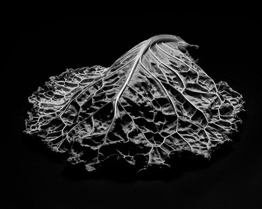 Cabbage 2013-08-23 -18-Edit 1-2