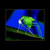 grass hopper-039 copy3