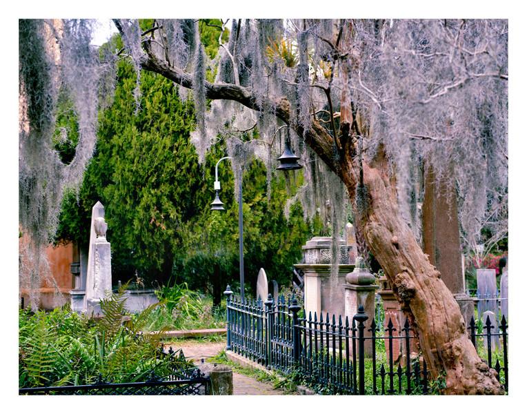 Charleston cemetary 2013-2204 copy3 11x14w