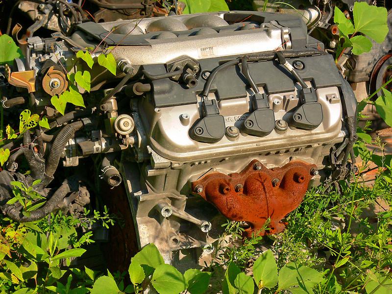 Organic Engine
