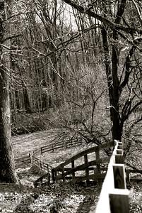 Black & White Fence Line DSC_0107