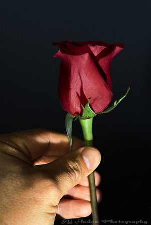 Feb 12th, 2008 - The name of the rose. A flower for you, me, for the wonderful cake so delicious. have a great day! JY